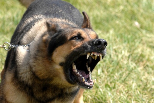 Image of a dog reacting while on leash.